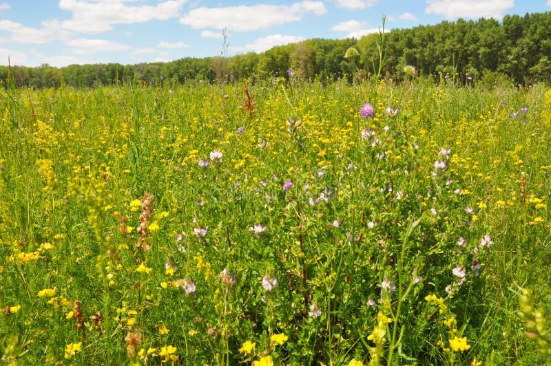 有许多的美丽的草甸开花的野花