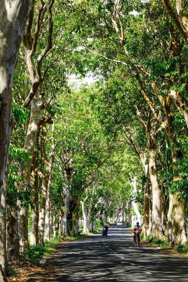 有许多绿色树的农村路 库存照片