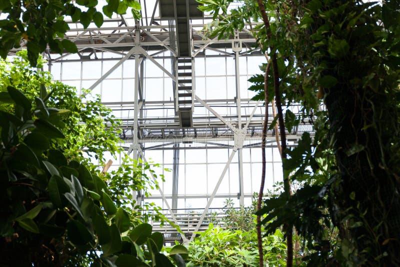 有豪华的植物的热带温室玻璃窗背景的  一个植物园的概念 图库摄影