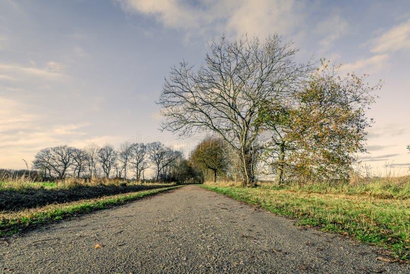 有赤裸树的自然道路 库存图片