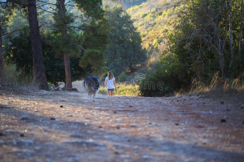 有走在森林里的大牧羊犬狗的女孩 免版税库存照片