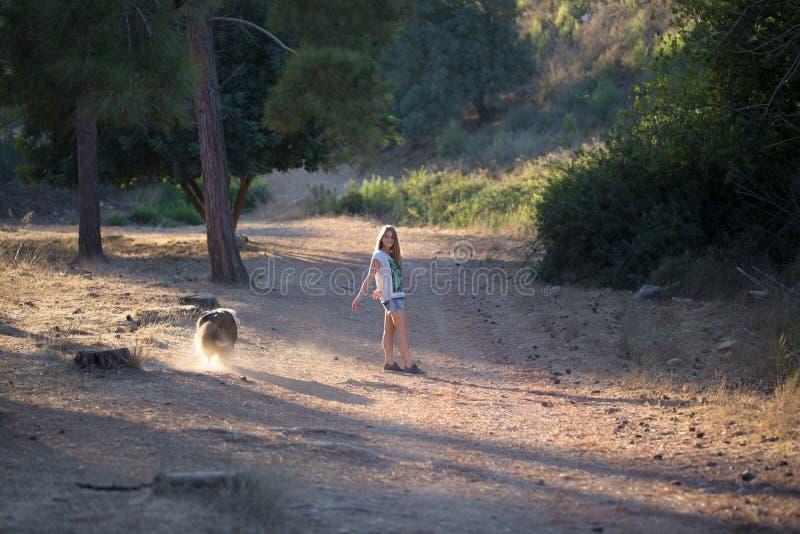 有走在森林里的大牧羊犬狗的女孩 库存图片