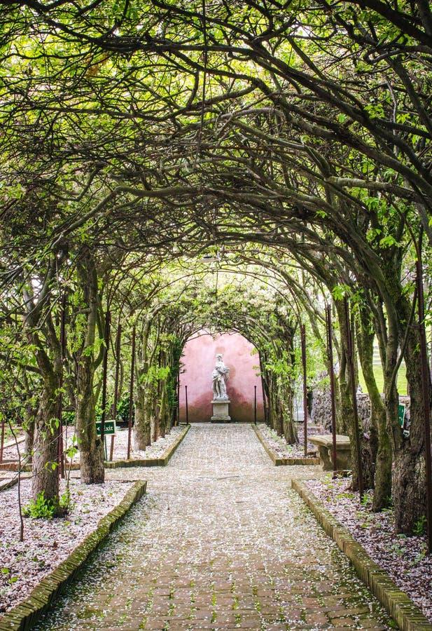 有走道和雕象的树隧道 库存照片