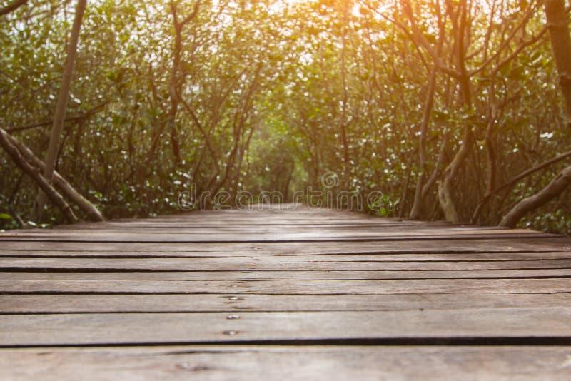 有走道的树隧道,木桥在美洲红树森林里 免版税库存图片