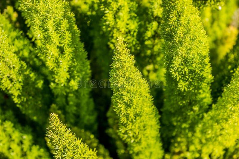 有趣的蕨类型生长在Healdsburg加利福尼亚的植物 图库摄影