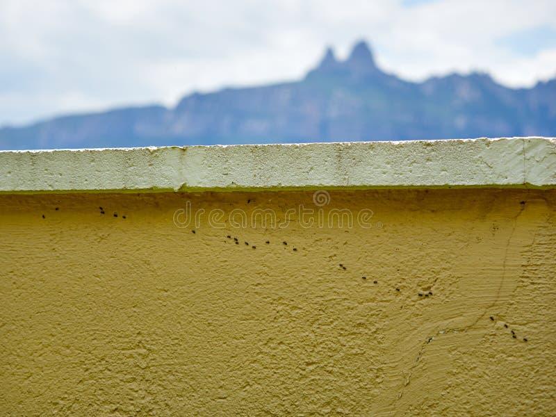 有跑沿它的一个小组的外墙蚂蚁 免版税库存照片