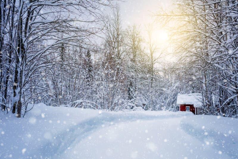 有路的冬天森林和阳光、大树和雪 图库摄影
