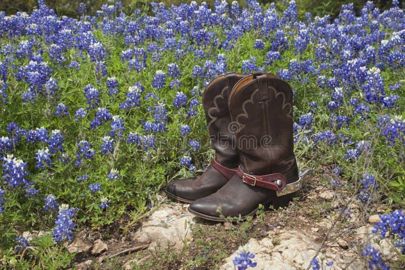 有踢马刺的牛仔靴在得克萨斯矢车菊的领域 免版税库存照片