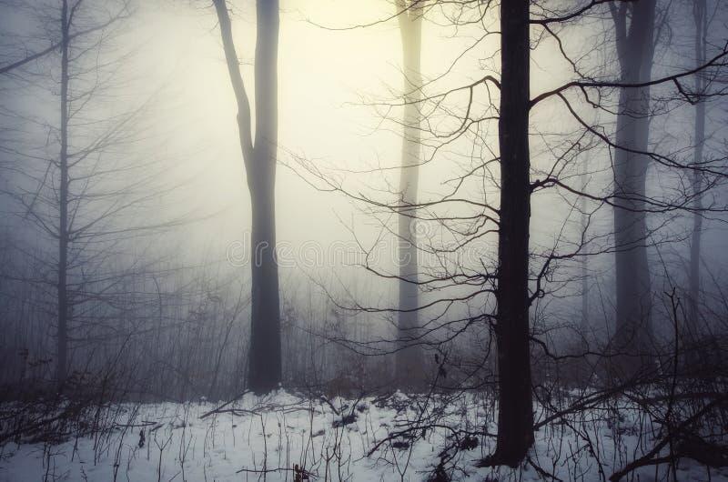 有轻发光的不可思议的冬天森林通过雾 免版税库存图片
