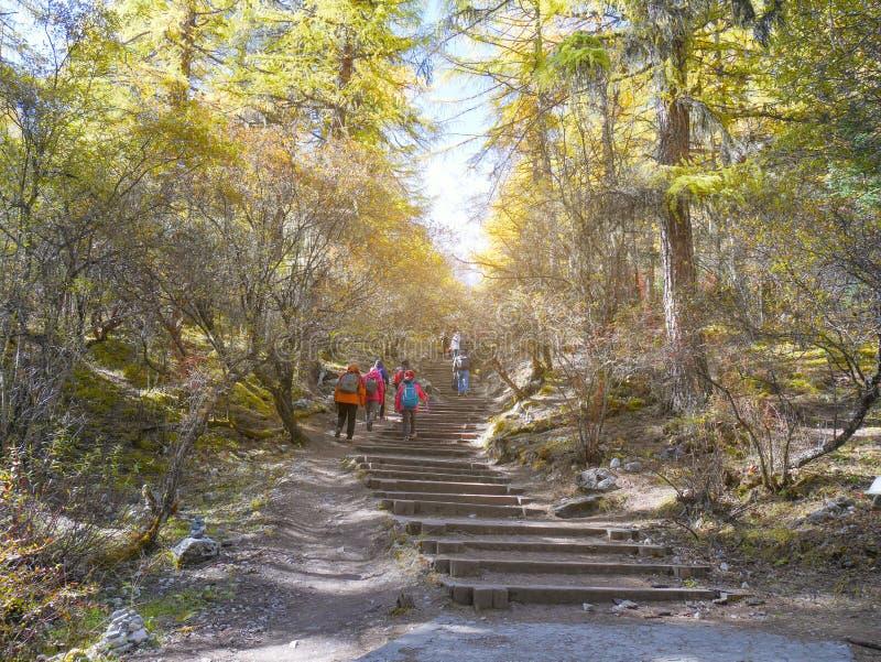 有迁徙通过秋天森林的背包的人们 免版税库存照片