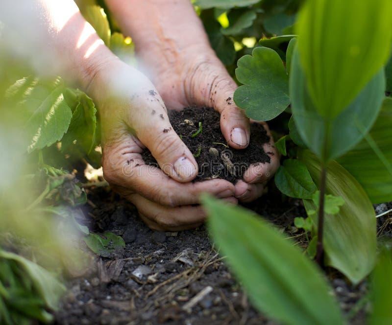 有运作在庭院里的土壤的女性手 免版税库存照片