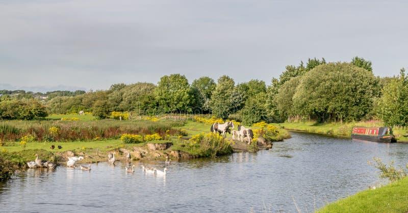 有运河驳船和动物的利兹利物浦运河 库存照片