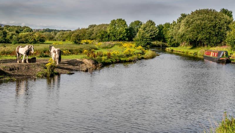 有运河驳船和动物的利兹利物浦运河 免版税库存图片