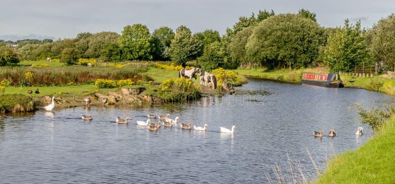 有运河驳船和动物的利兹利物浦运河 免版税库存照片