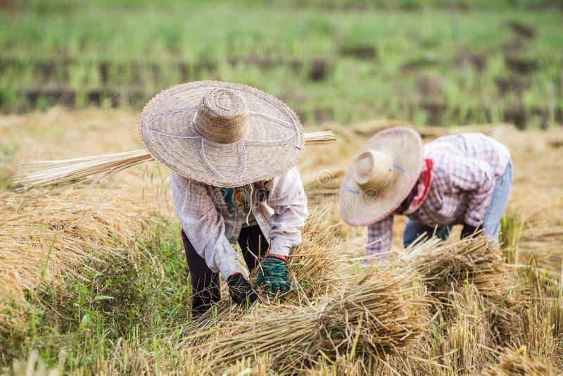 草帽农夫_有运转在米收获期间的草帽的农夫