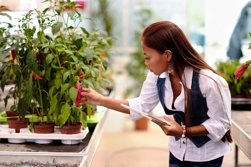 有运转自温室的片剂的年轻人相当亚裔妇女农艺师检查植物 库存图片