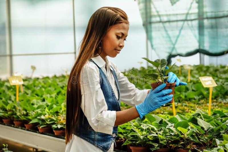 有运转自温室的片剂的年轻人相当亚裔妇女农艺师检查植物 库存照片