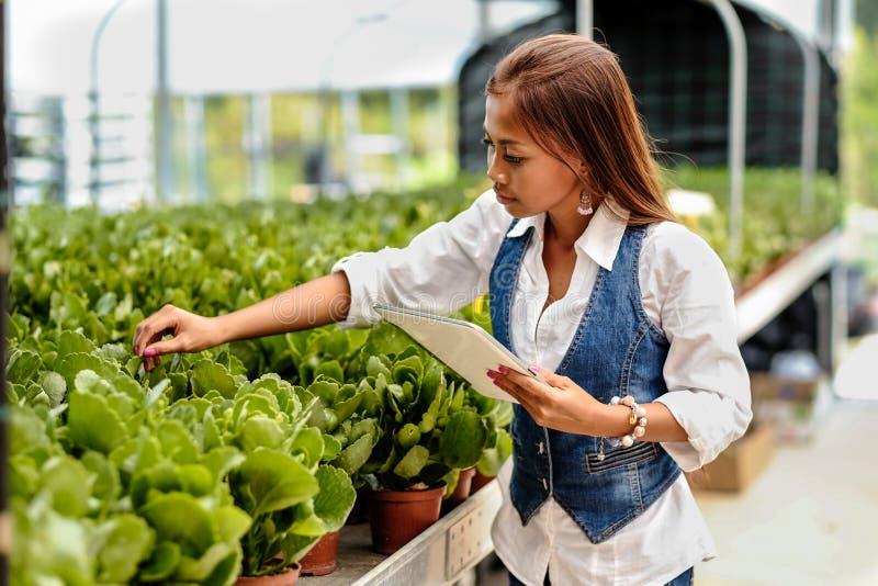 有运转自温室的片剂的年轻人相当亚裔妇女农艺师检查植物 免版税库存图片