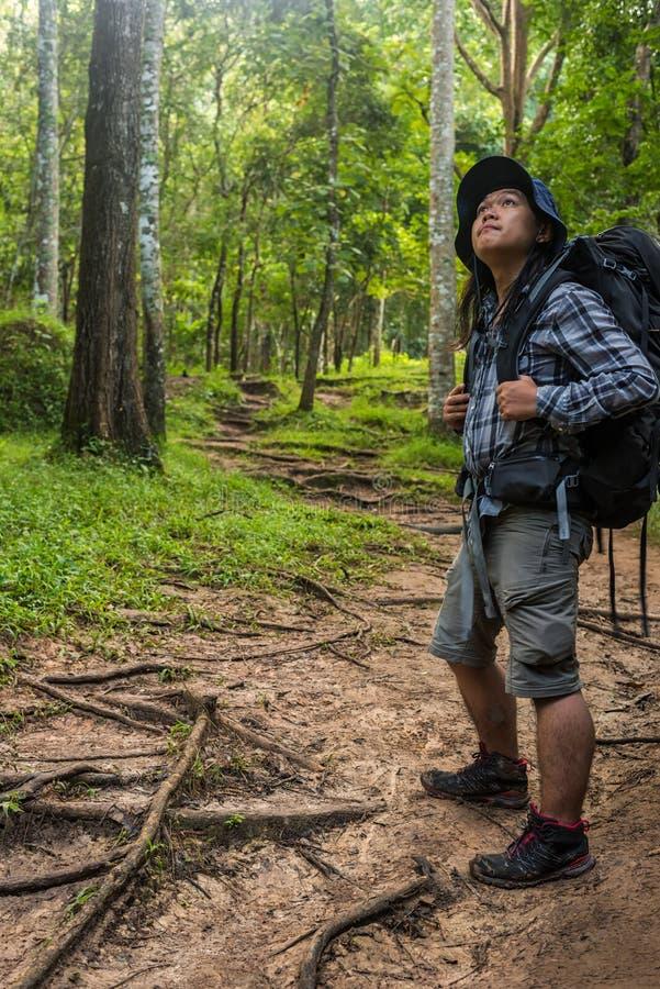 有远足的设备人走在moutain森林里的 库存照片