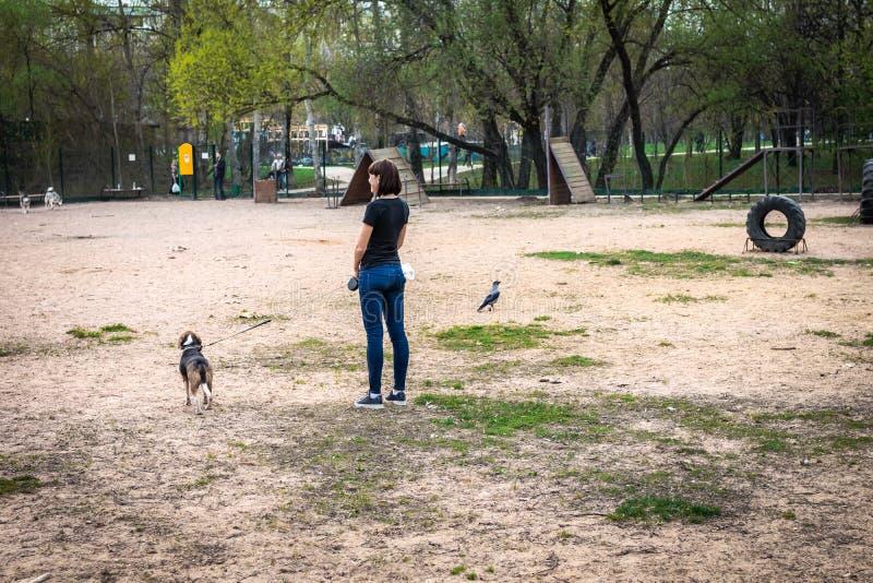 有逗人喜爱的小猎犬狗的年轻女人在训练场 库存照片