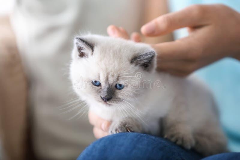 有逗人喜爱的小的小猫的年轻女人在家 免版税库存图片