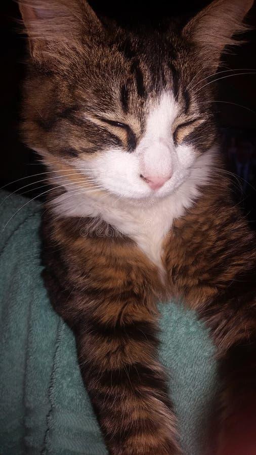 有逗人喜爱的猫一个早晨好 库存图片