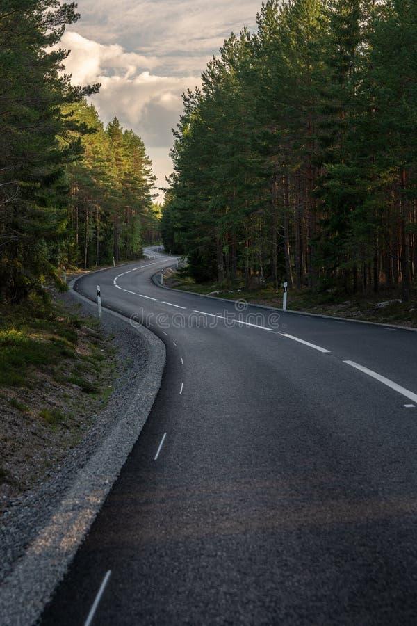 有通过低谷瑞典乡下的空白线路的弯曲的柏油路一个绿色夏天杉木森林 免版税库存照片