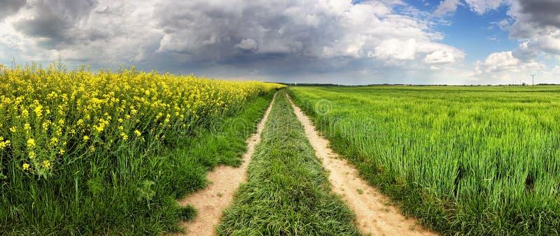 有道路的农村乡下和在风暴的绿色黄色领域 免版税库存照片