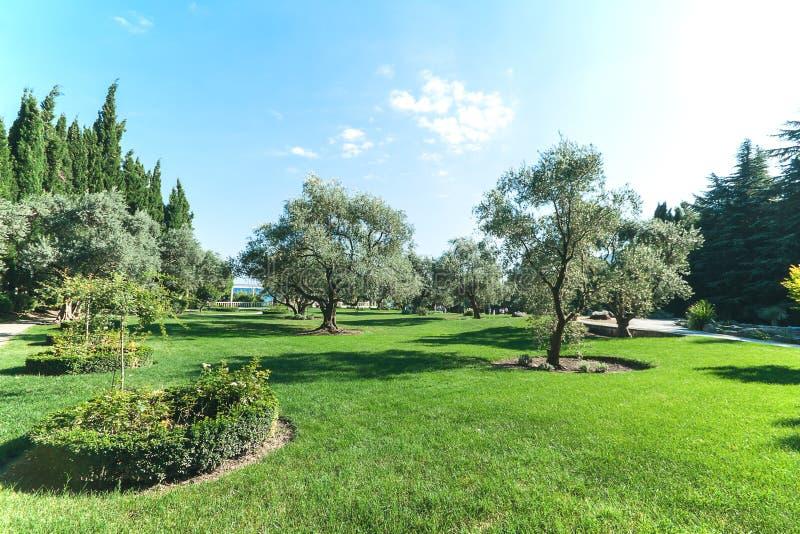 有道路的美丽的公园在suumer天蓝天-庭院设计-风景 免版税库存照片