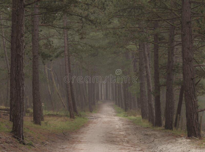 有道路的黑暗的喜怒无常的森林穿过它 早期的黑暗的早晨步行 免版税库存照片