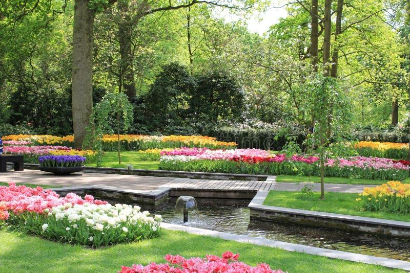 有郁金香和池塘的美丽的花园和绿色在keukenhof庭院里 免版税库存图片