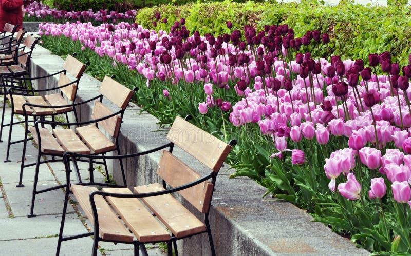 有郁金香和长凳的公园 免版税库存图片