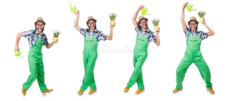 有郁金香的年轻滑稽的花匠和喷壶隔绝了oin w 免版税库存图片