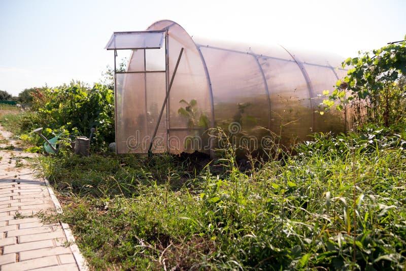 有里面种植的一间小温室在路附近,在它旁边生长绿色植物和草,有一把喷壶,工具 免版税库存照片