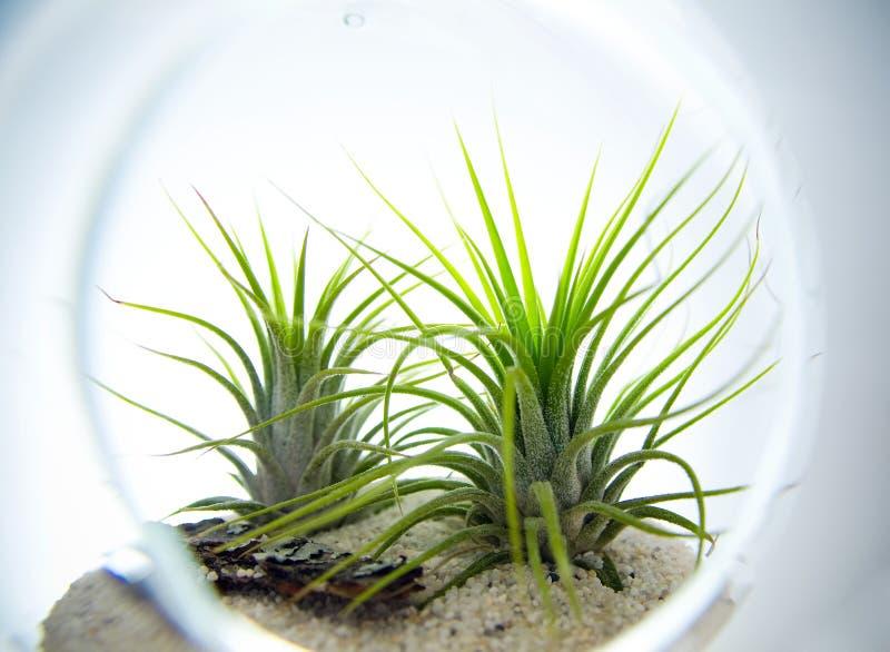 植物玻璃容器 免版税库存图片