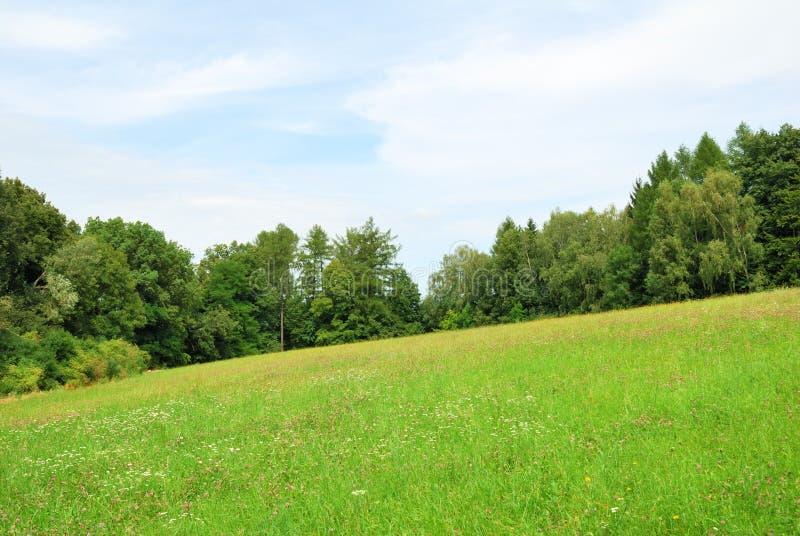 有野花和林木的绿色草甸 库存图片