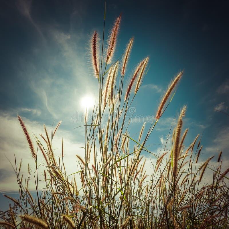 有野花的夏天草甸 提取花卉背景 库存图片
