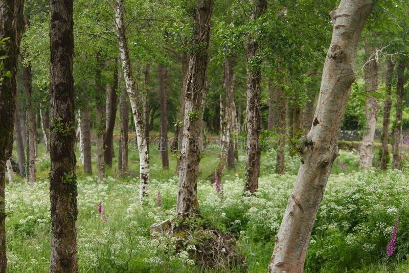 有野花的森林 库存图片