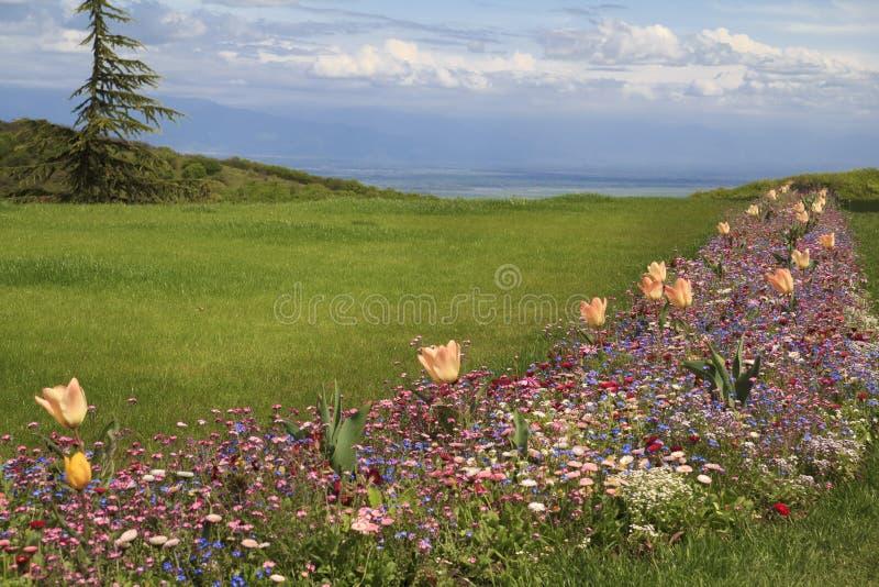 有野花的沼地 免版税库存照片