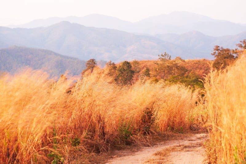 有野花的美丽如画的山土路在黄昏 免版税图库摄影