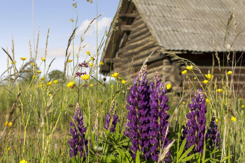有野花的草坪在前面农舍 免版税图库摄影
