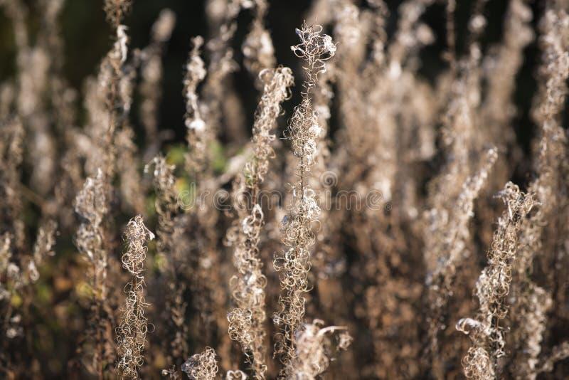 有野草的森林草甸,与小景深的图象 免版税库存照片