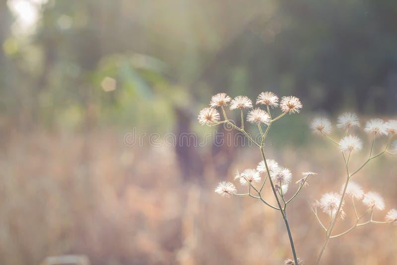 有野草的森林草甸,与小深度的宏观图象  库存照片