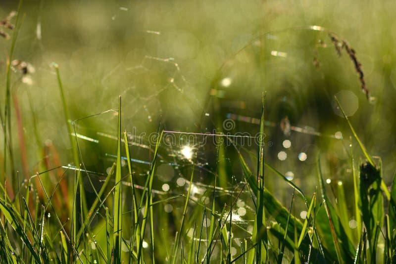 有野草的森林草甸 与小深度的宏观图象  免版税库存图片