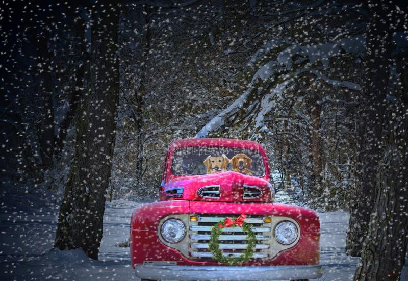有金毛猎犬的圣诞节卡车 免版税库存照片