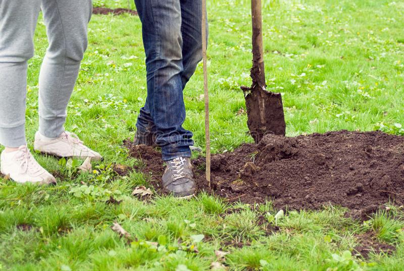 有铁锹的种植一棵年轻树的女孩和男孩在公园草背景的 免版税库存图片