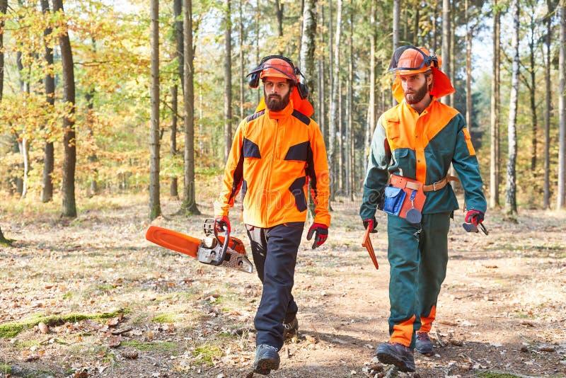 有锯和防护服装的伐木工人在森林里 免版税库存图片