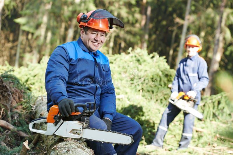 有锯的伐木工人工作者在森林里 免版税库存图片