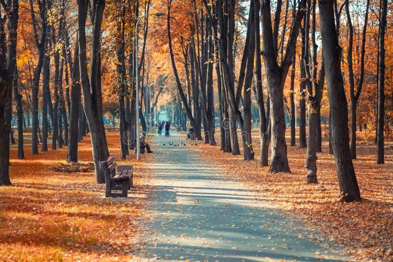 有长凳的美丽的风景胡同在树和金黄色的叶子醉汉之间在城市公园 在五颜六色的秋天的人行道 免版税库存照片