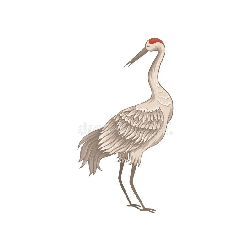 有长的稀薄的额嘴、腿和脖子的美丽的起重机 与大翼和红色皮肤的鸟在头 平的传染媒介设计 库存例证